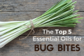 how to stop bug bites from itching, home remedies for bug bites