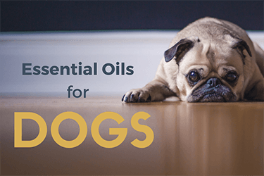 Essential Oils for Dogs – Can you use essential oils on dogs and pets?