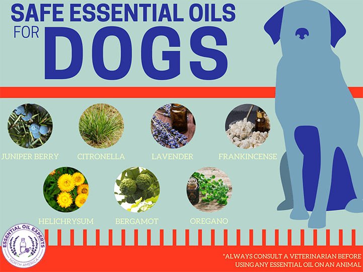 7 Safe Essential Oils For Dogs | EssentialOilExperts.com