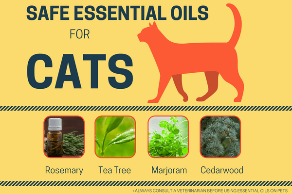 essential oils for cats, aromatherapy for cats, tea tree oil fleas