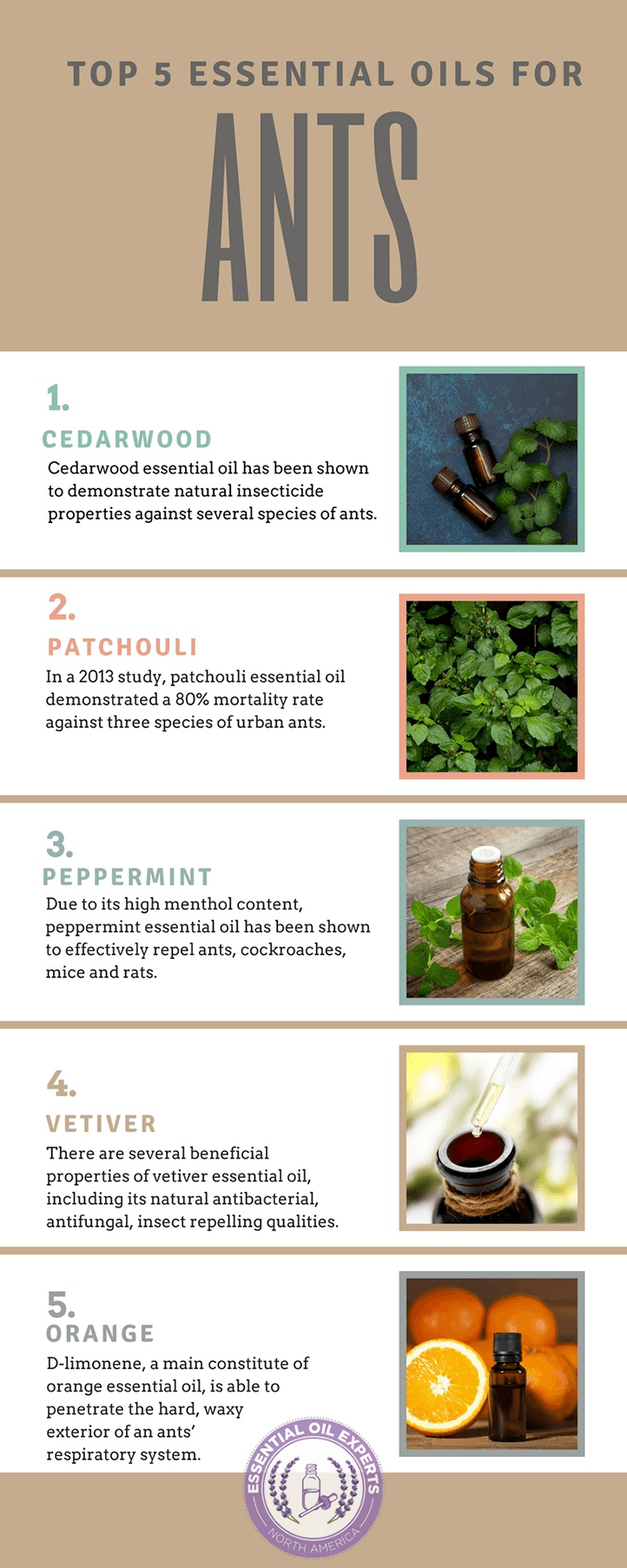 essential oils for ant repellant, peppermint oil ants