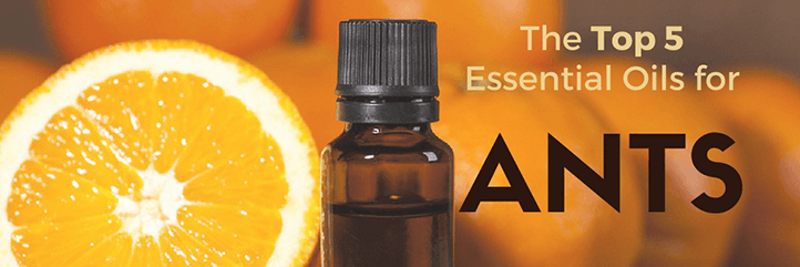 Natural ant repellent, essential oils for ants
