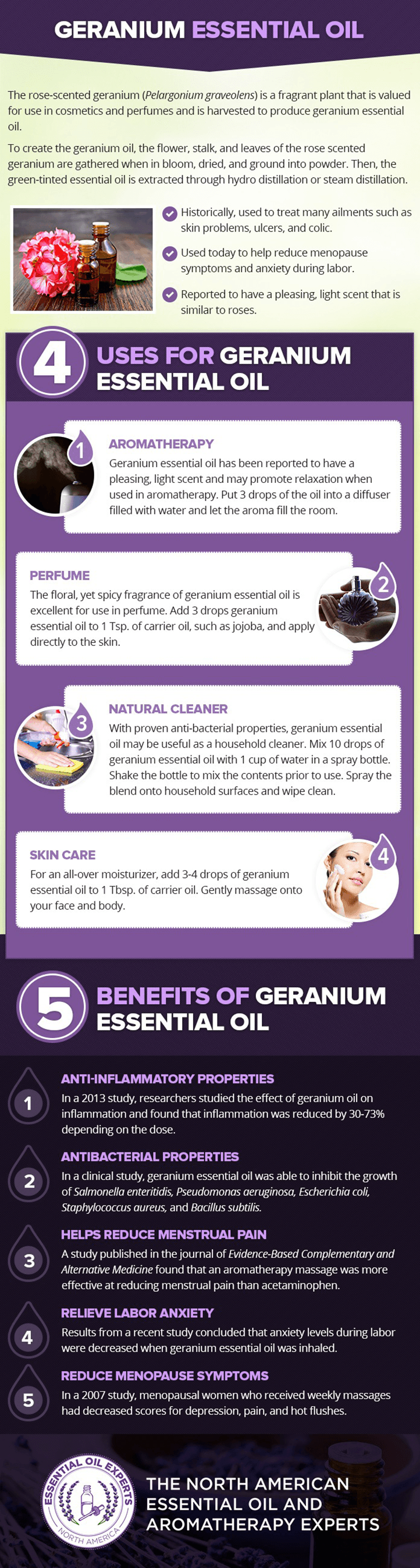 where to buy rose geranium essential oil, uses and benefits