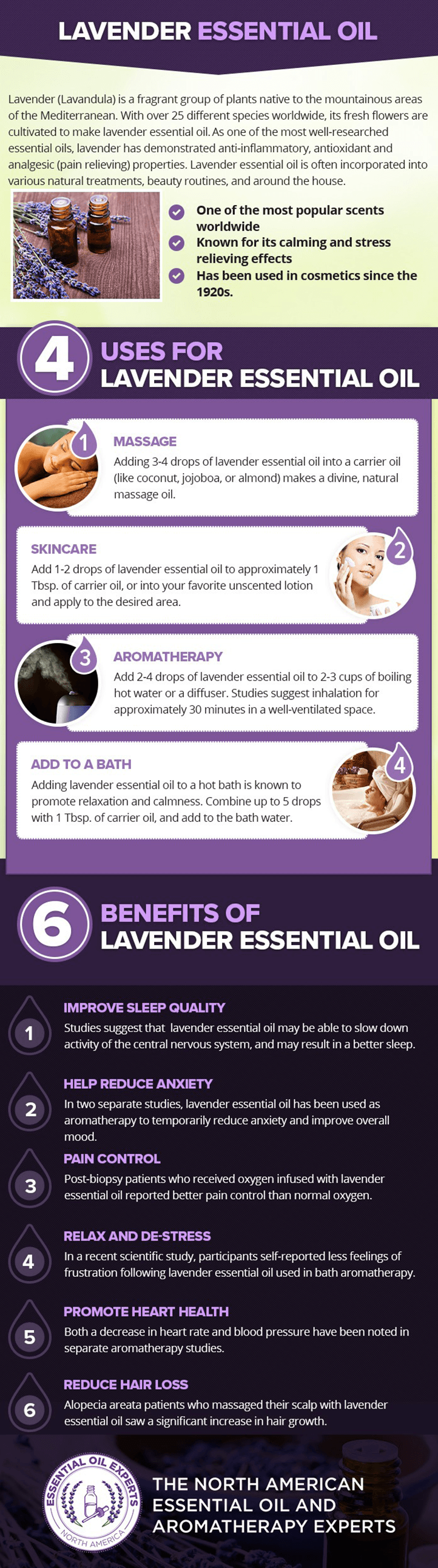 Lavender Infographic